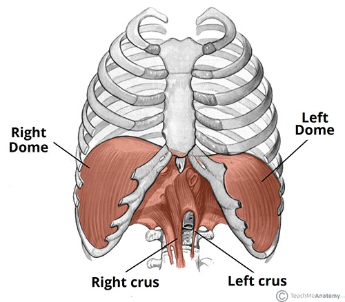 Consider, that bottom sternum discomfort